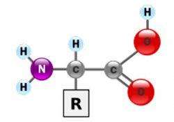 amonizuur