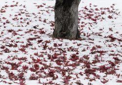 herfstdepressie winterdepressie