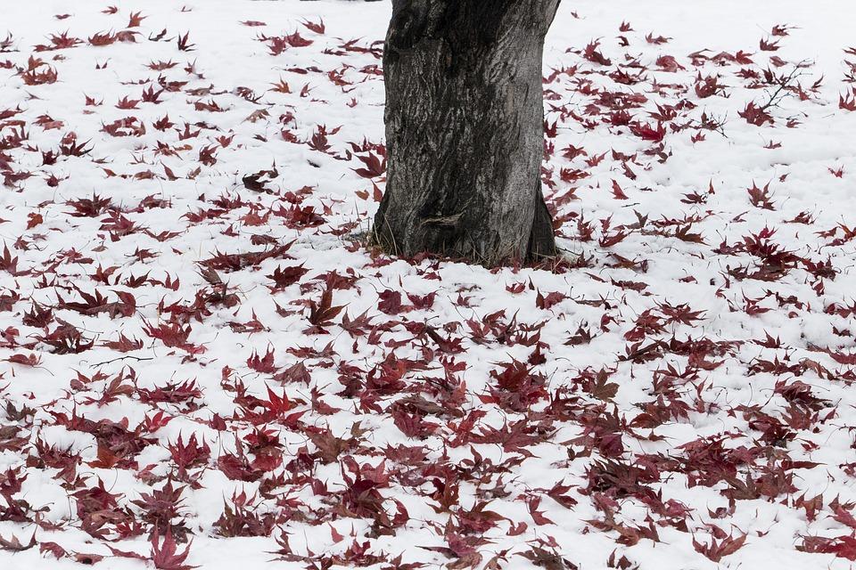 Herfstdepressie en Winterdepressie tips